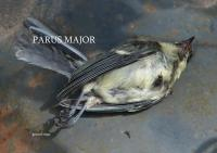 Parus major by Gerard Stout