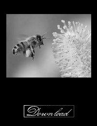 Pollen In The Air by Tony Kline